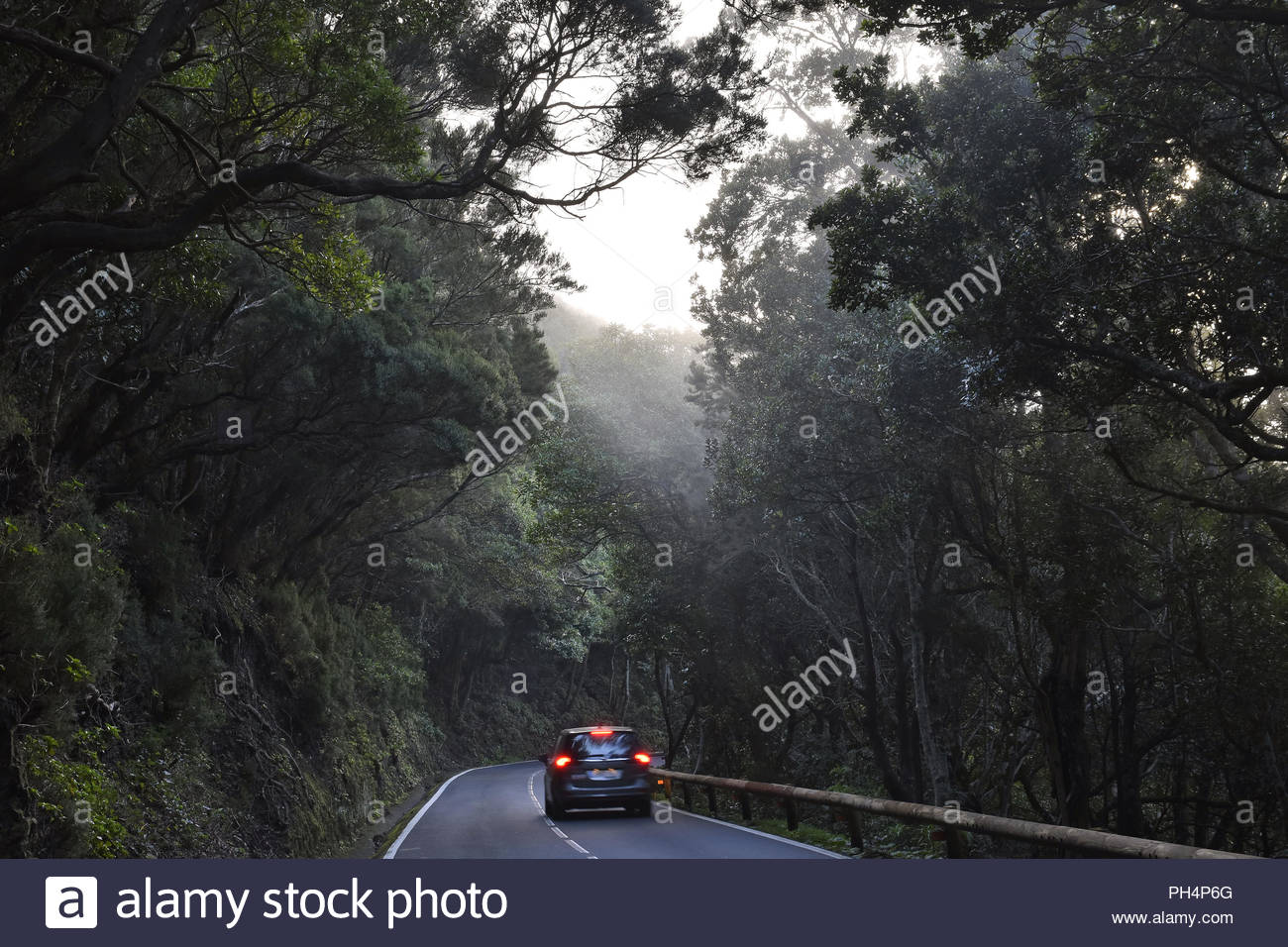 TF-12 road through dense forest with laurel trees. Mist forming in Anaga mountains near Las Mercedes, northeast of Tenerife Canary Islands Spain. - Stock Image