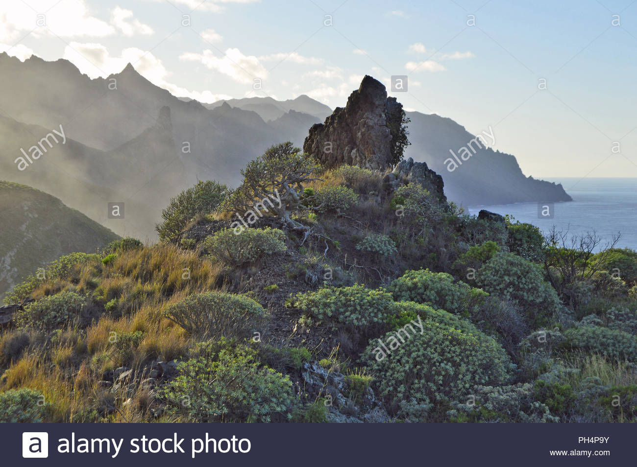 Rugged volcanic landscape with succulent plants, Anaga mountains near Almaciga, northeast of Tenerife Canary Islands Spain. - Stock Image