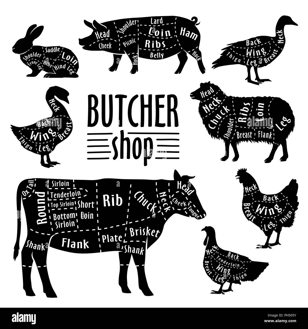 Cut of animals meat, diagram for butcher. Meat cut set - Stock Image
