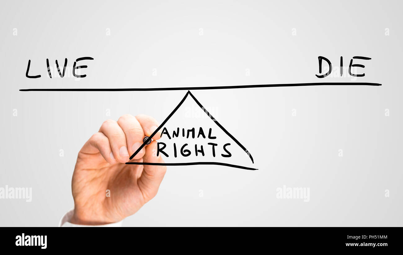 animal rights - to live or to die, a conceptual image of the status of animal  rights with a man drawing a seesaw on a virtual interface balancing the