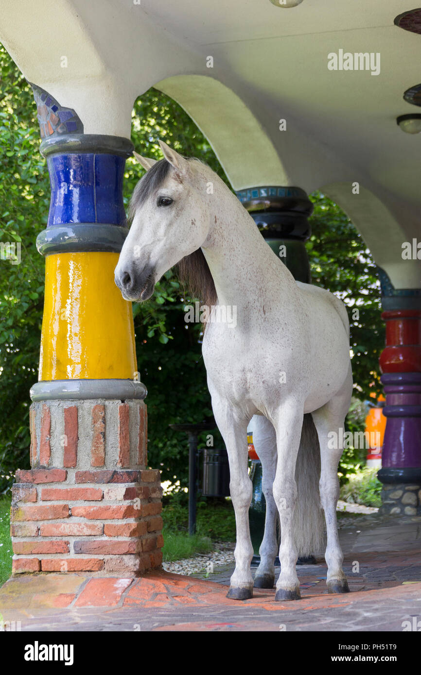 Pure Spanish Horse, PRE, Andalusian Horse. Grey stallion standing among multicolored columns at hotel and spa Rogner Bad Blumenau (designed by Friedensreich Hundertwasser). Styria, Austria - Stock Image
