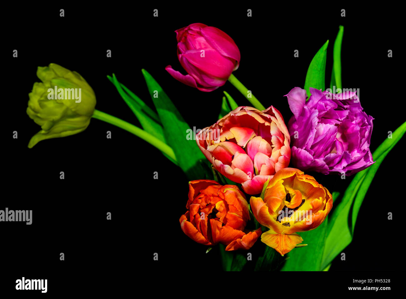 Fine art  floral still life colorful flower macro of a blooming tulip bouquet of six on black background with red,pink,orange,violet,yellow blossoms Stock Photo