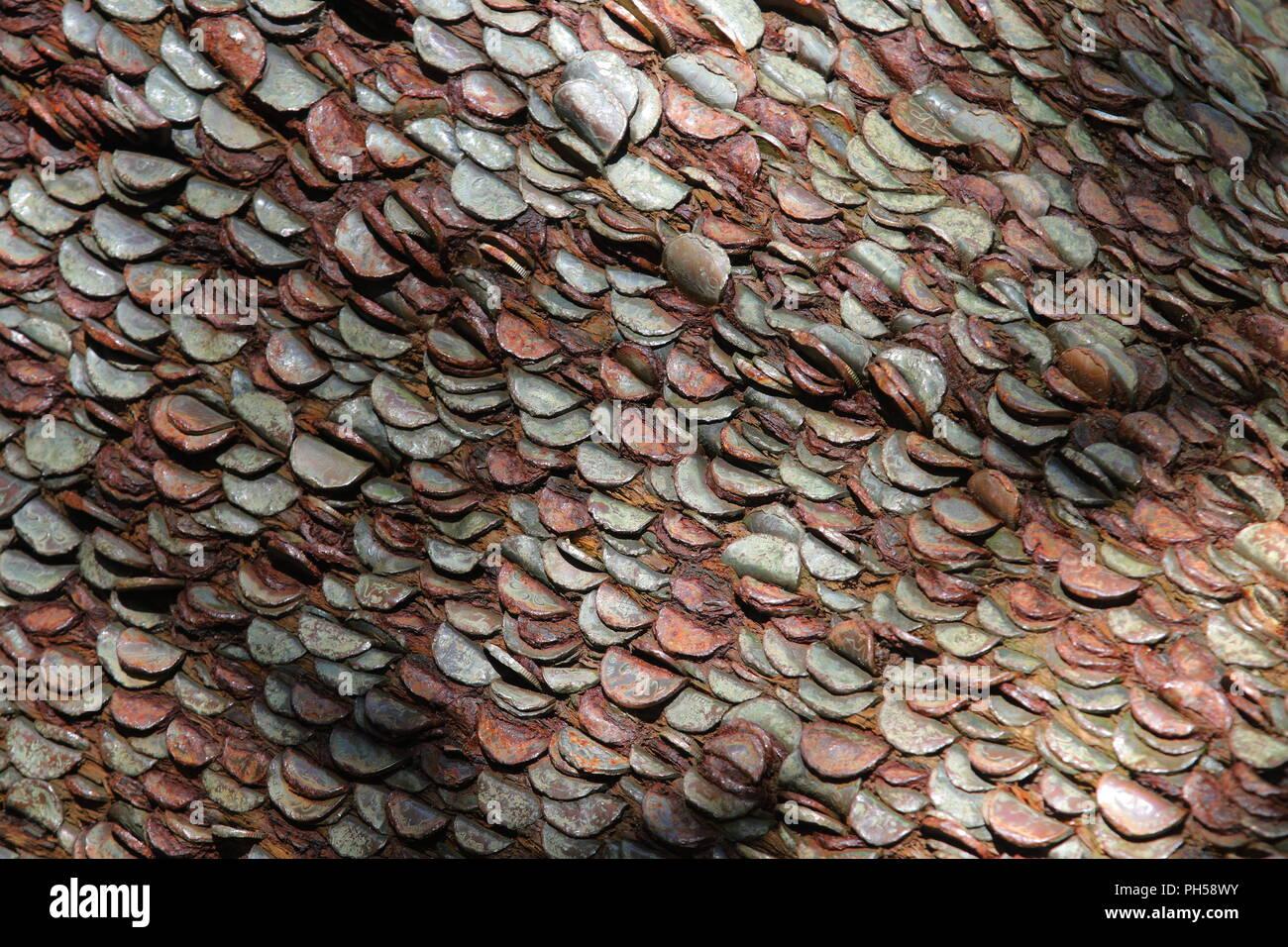 Money Tree Coins Stock Photos & Money Tree Coins Stock Images - Alamy