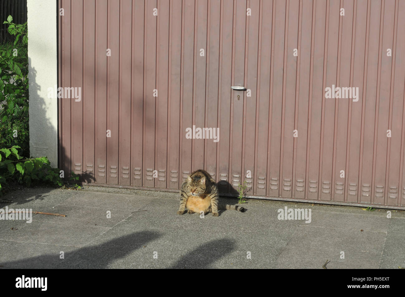 Angry Cat Sitting In Front Of A Garage Door Stock Photo 217095056