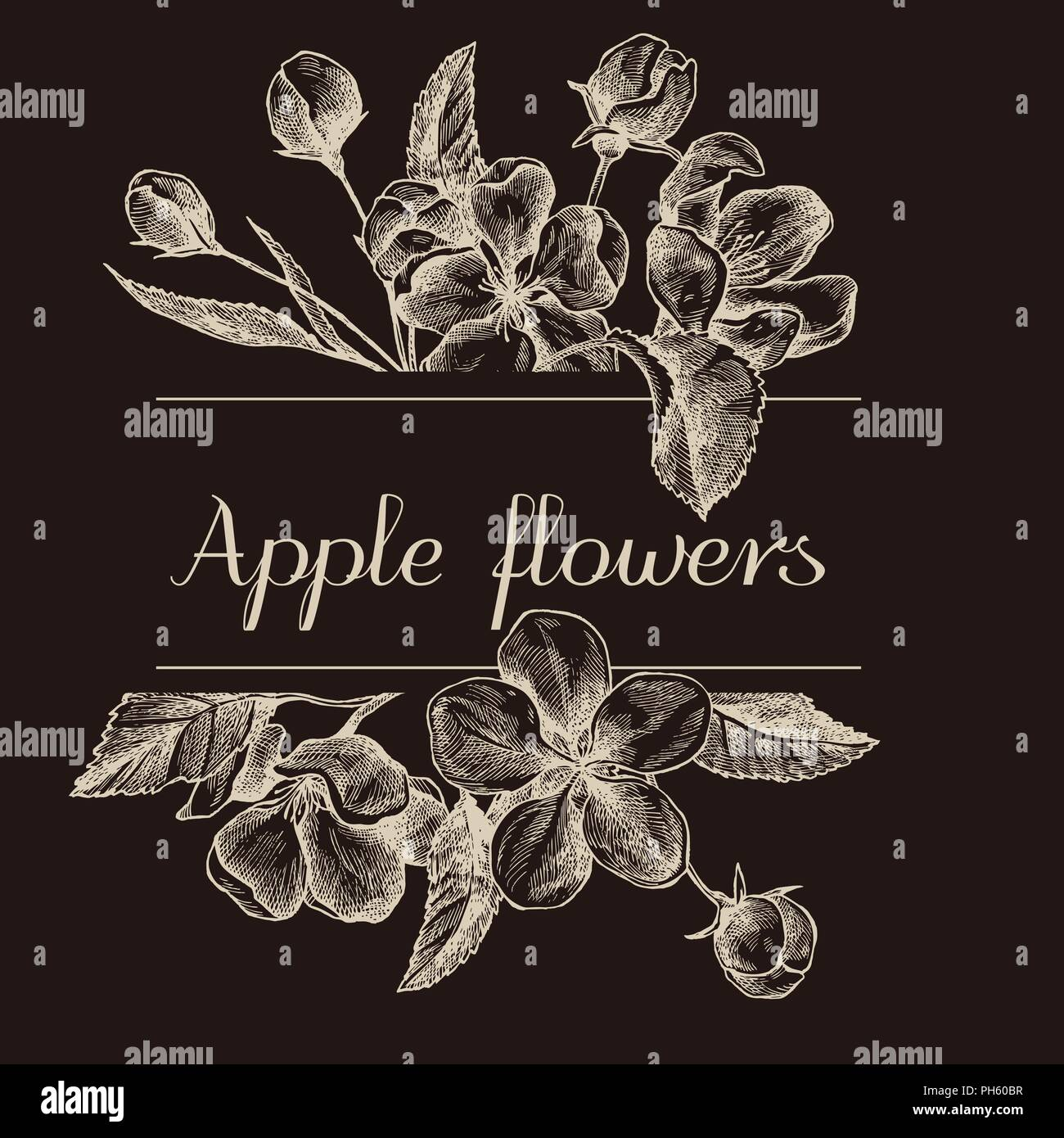 hand drawn design with apple flowers isolated on chalkboard stock