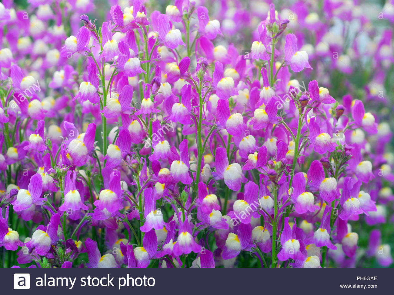 Small Purple And White Flowers Stock Photos Small Purple And White