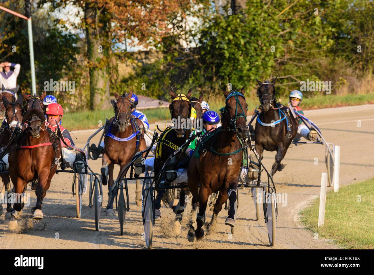 Baden Trabrennbahn Traber Harness Racing Wienerwald Vienna