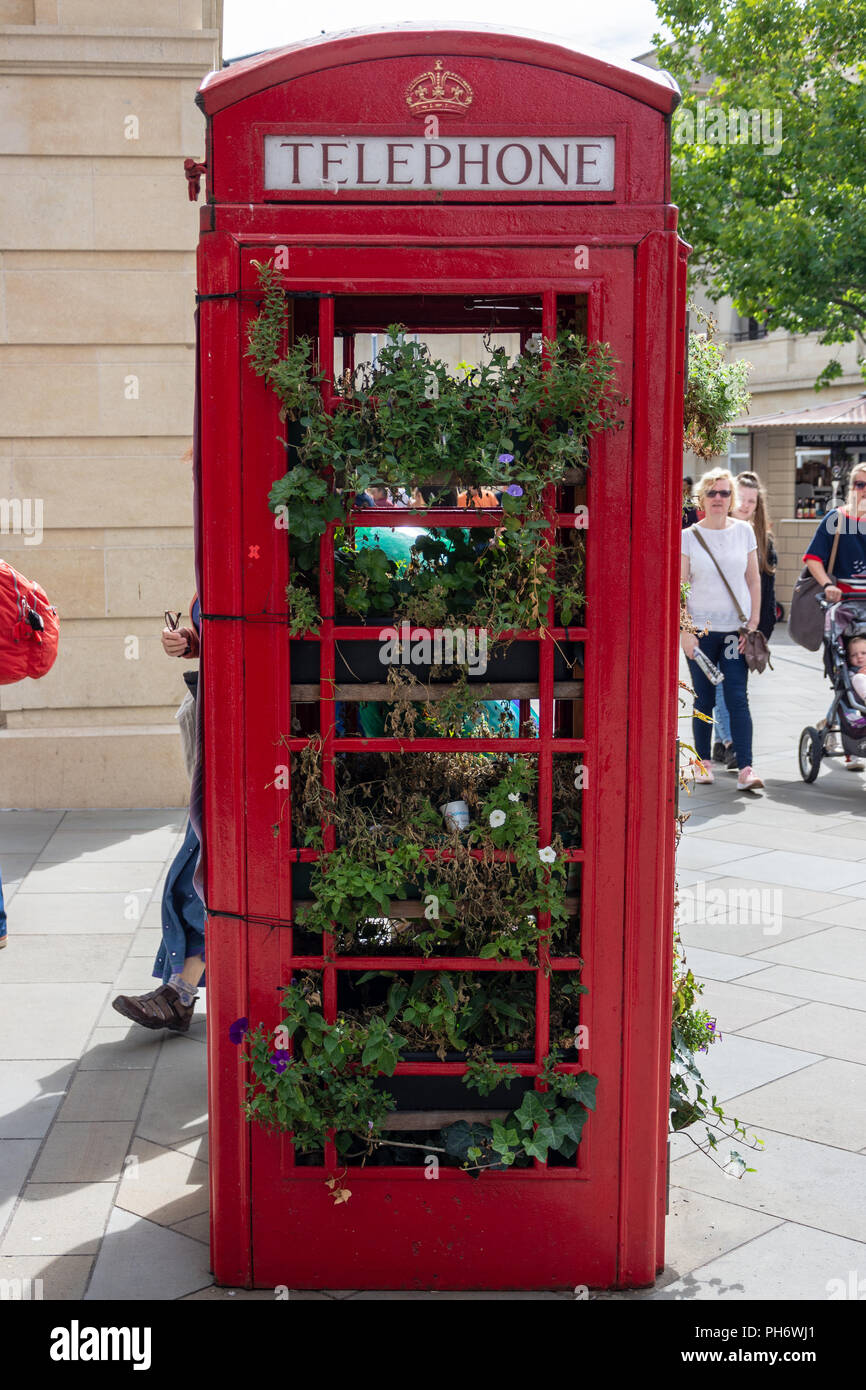 Old red telephone box used to contain growing plants in the centre shopping area in the city of Bath - Stock Image