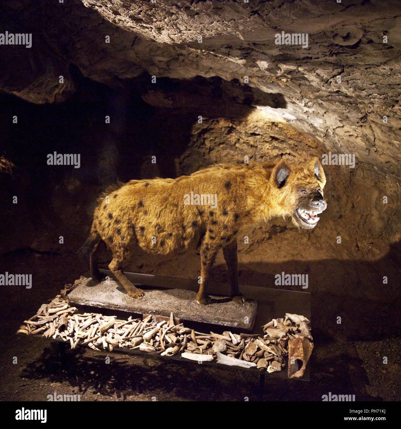 Henrich cave Hemer, North Rhine-Westphalia,Germany - Stock Image