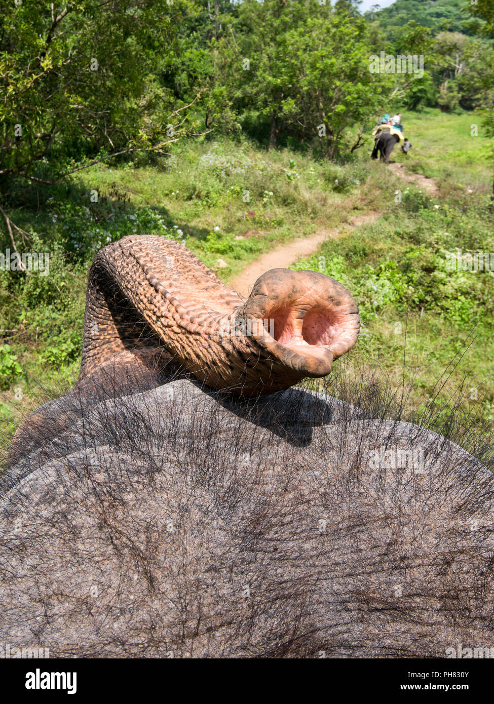 Vertical view from on top of an elephant's back. Stock Photo