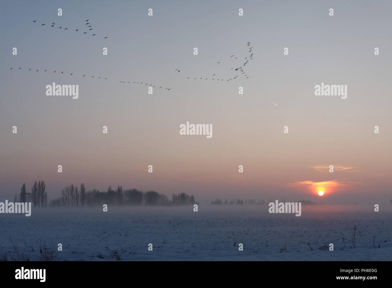 Vögel in der Abenddämmerung in Axien. Stock Photo