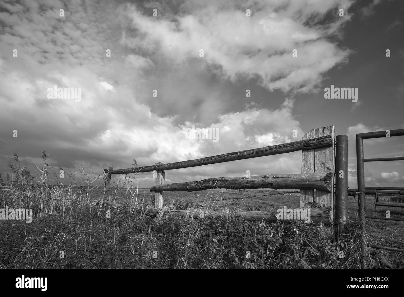 Pasture land near Cuxhaven - Stock Image