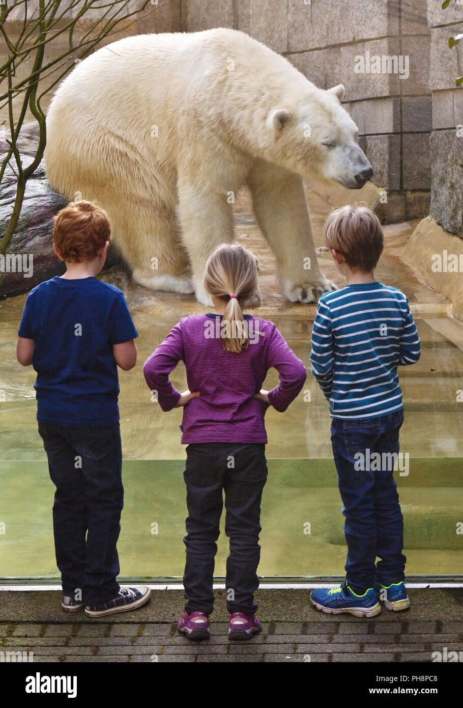 three childreen in front of a polar bear Wuppertal - Stock Image