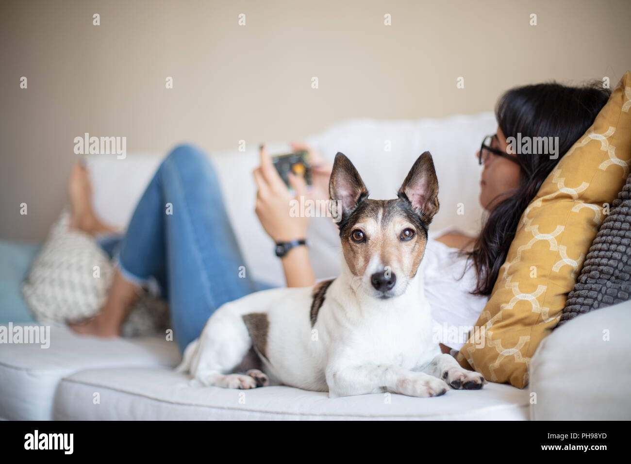 Alert loyal little dog lying beside its owner as a young woman relaxes on a sofa with her mobile phone with focus to the dog looking alertly at the ca - Stock Image