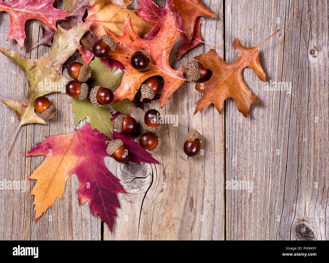 Autumn Leaf And Acorn Decorations On Rustic Wooden Boards Stock