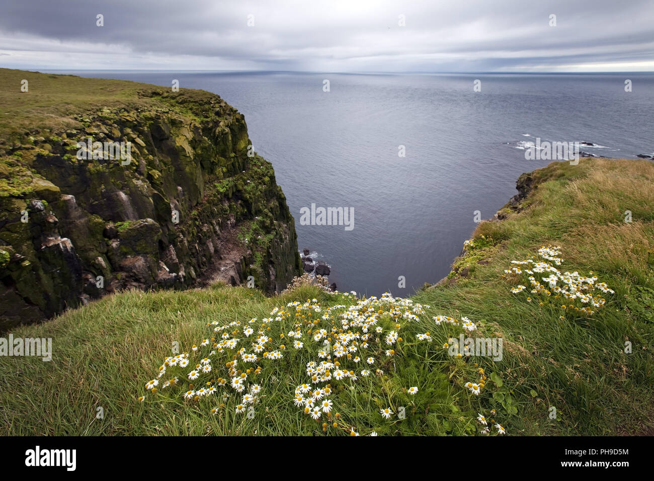 promontory Latrabjarg , Westfjorde, Iceland - Stock Image
