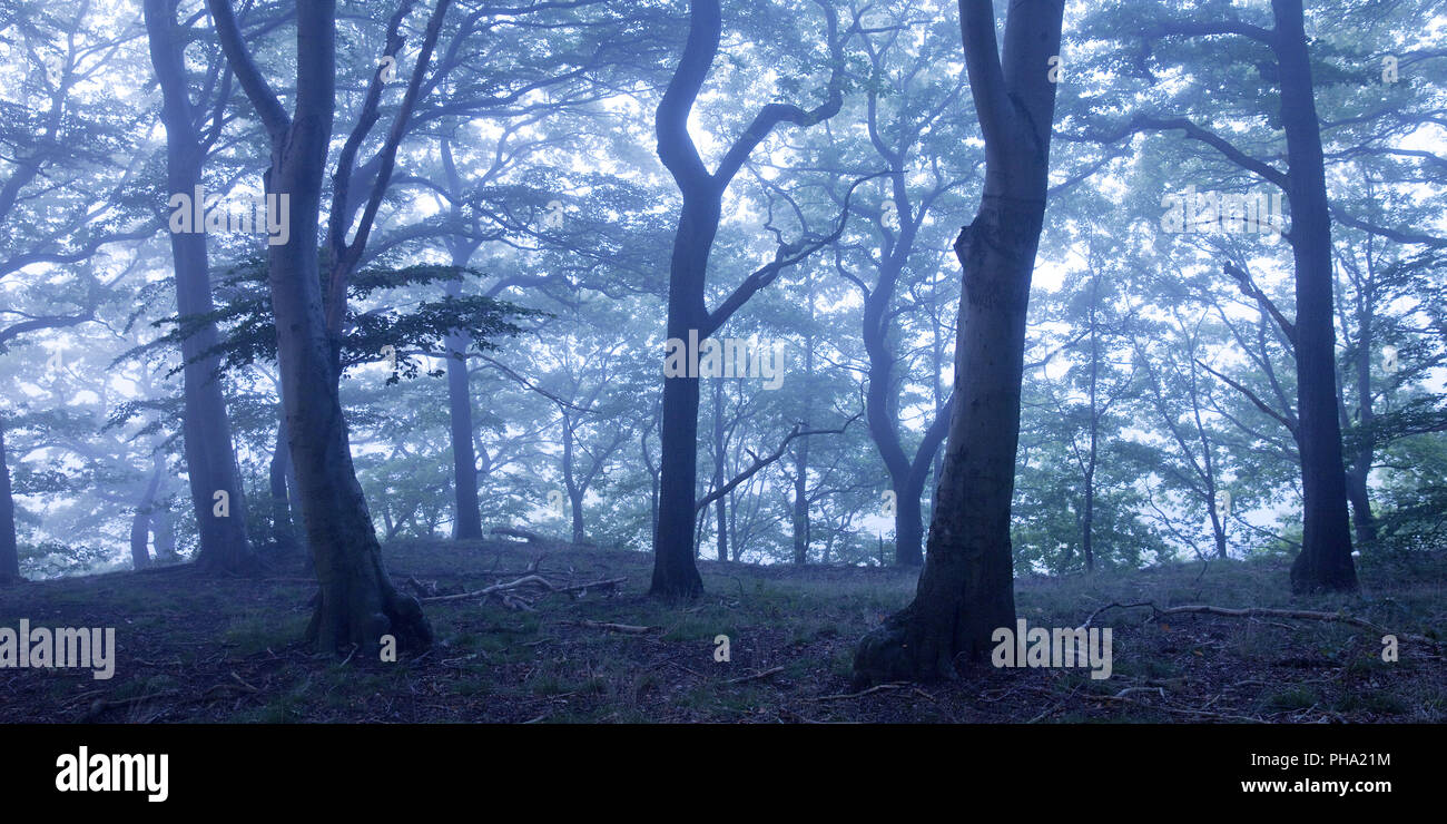 mysterious misty forest at dawn, Witten, Ruhr Area, North Rhine-Westphalia, Germany - Stock Image
