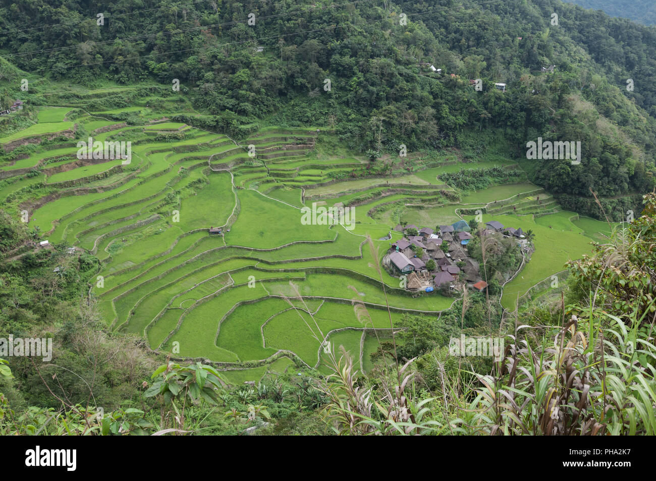 Green rice field on the island of Luzon, Philippines. - Stock Image