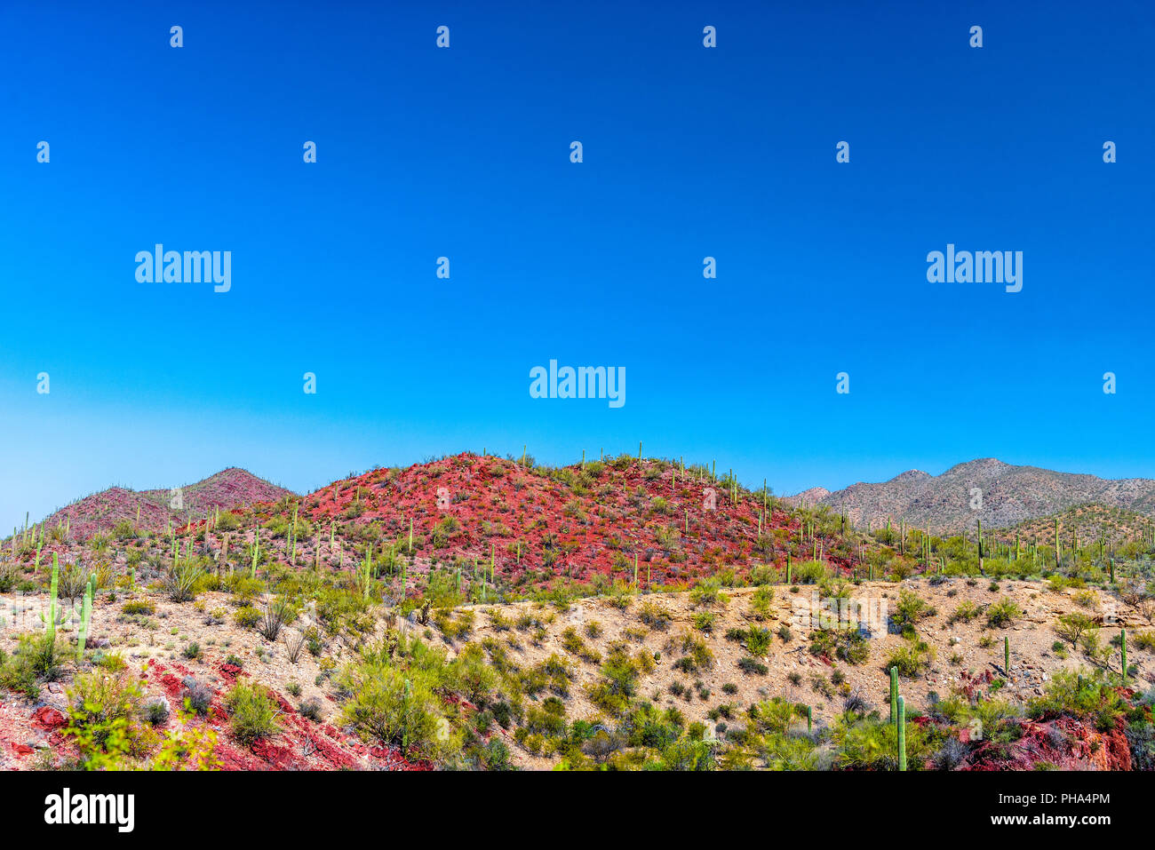 Colorful Southwestern desert with red hills under a blue sky. - Stock Image