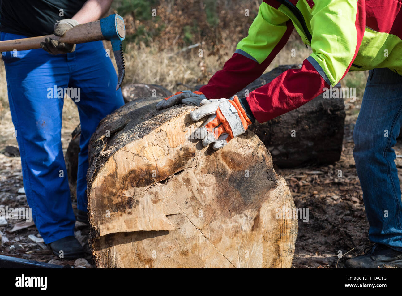 Lumberjacks working with trunk in forest Stock Photo