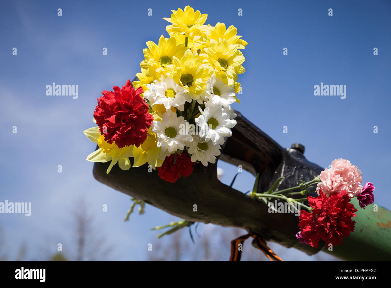 Beautifrul flowers in the barrel of the tank. May 9th. Victory day in Russia. Peace in the world. Memorial day Stock Photo