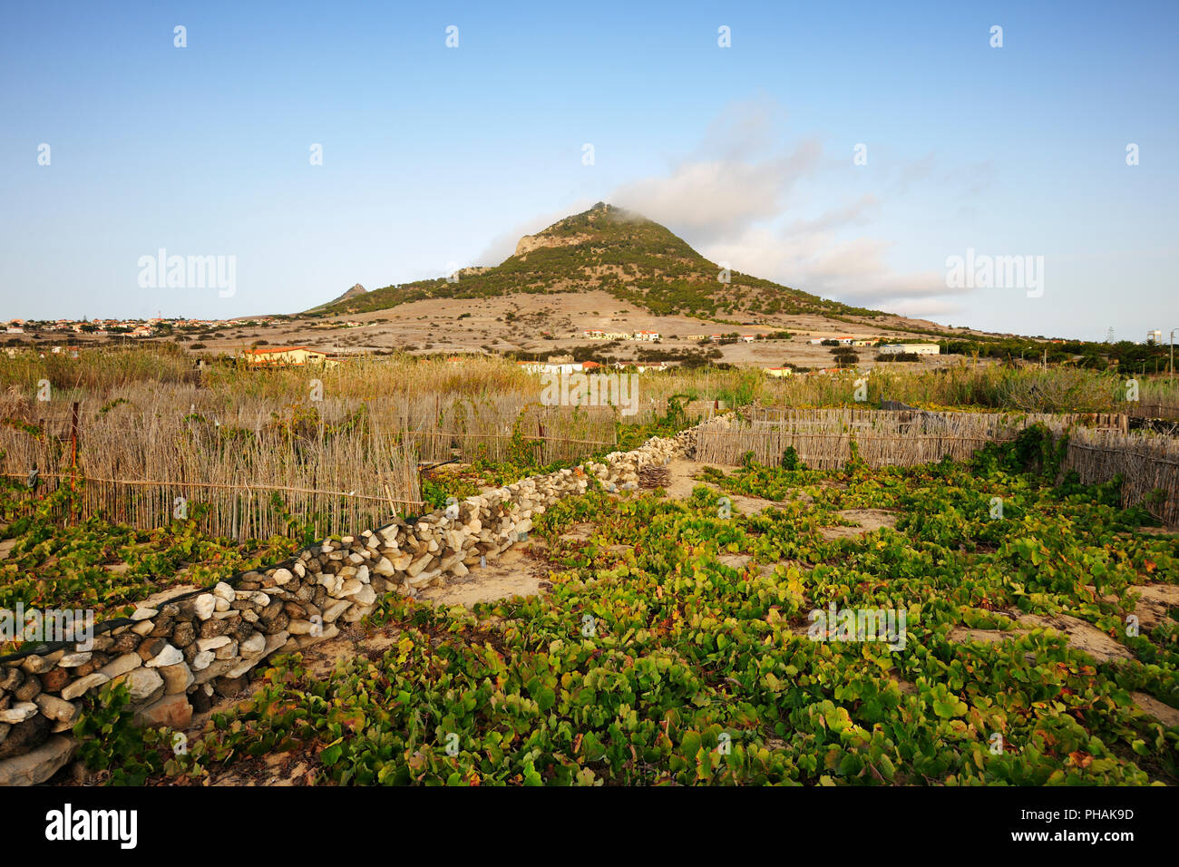 Vineyards of Camacha. Porto Santo island, Madeira - Stock Image