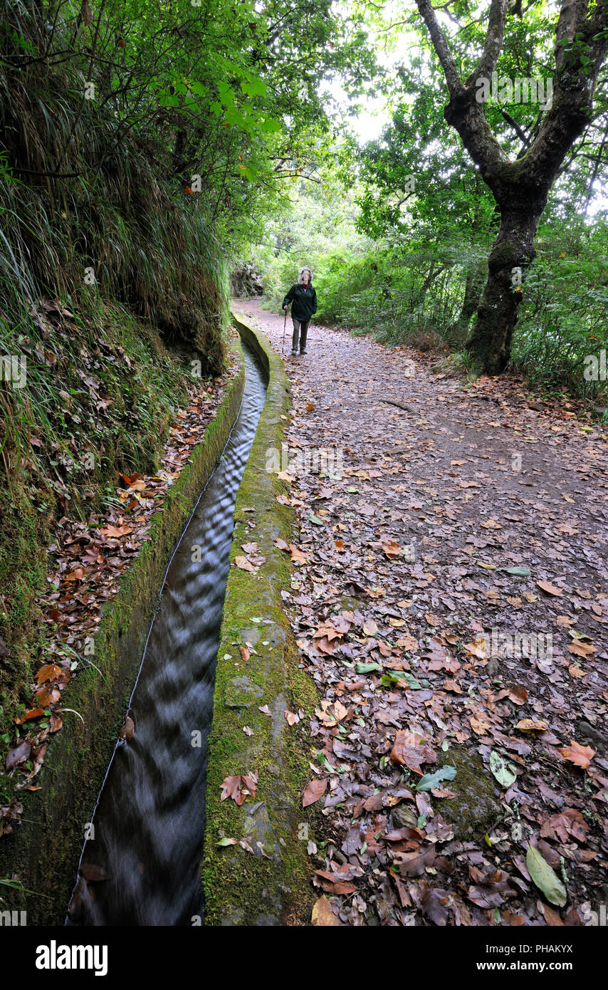 Walking trail along the 'Levada Velha', in the middle of the Laurisilva forest. UNESCO World Heritage Site. Madeira, Portugal - Stock Image