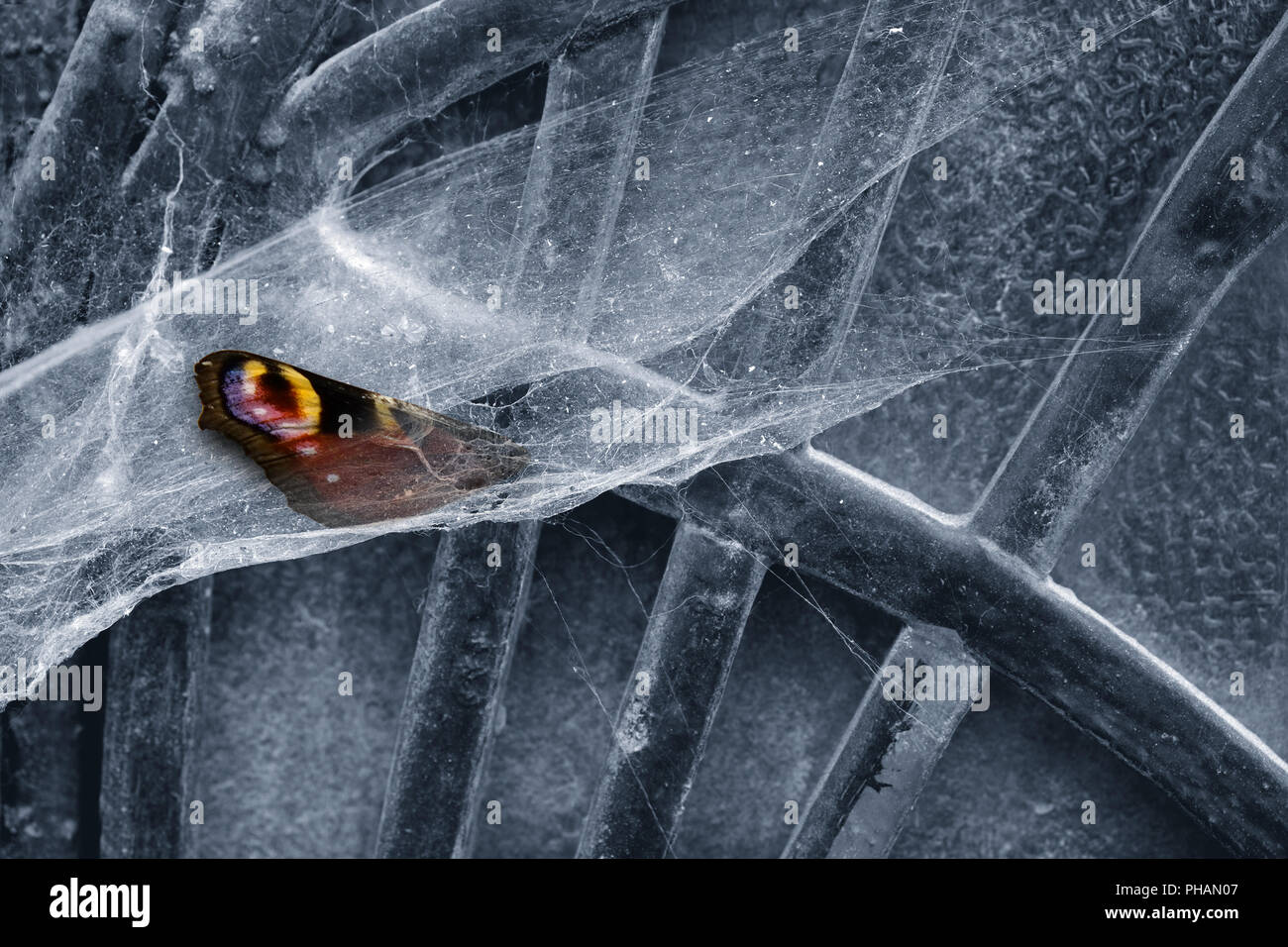 Spider webs - Stock Image