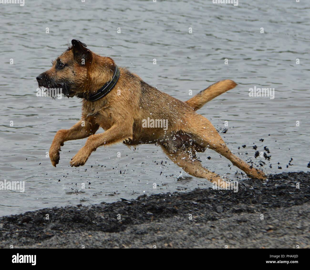 Dog chasing stones - Stock Image