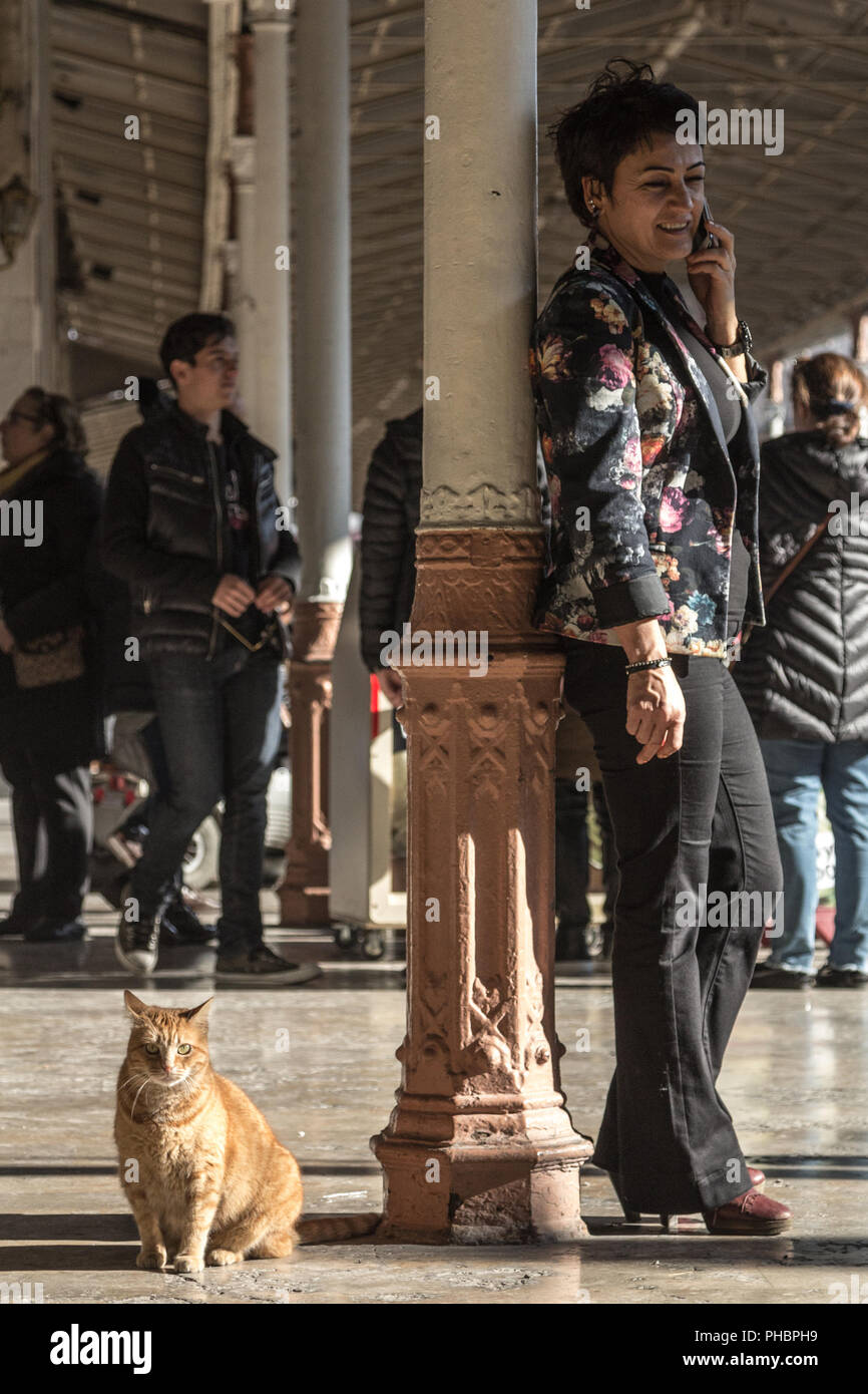 ISTANBUL, TURKEY - DECEMBER 28, 2015: Stray ginger cat sitting on the platform of Sirkeci train station next to a business woman using her telephone t - Stock Image