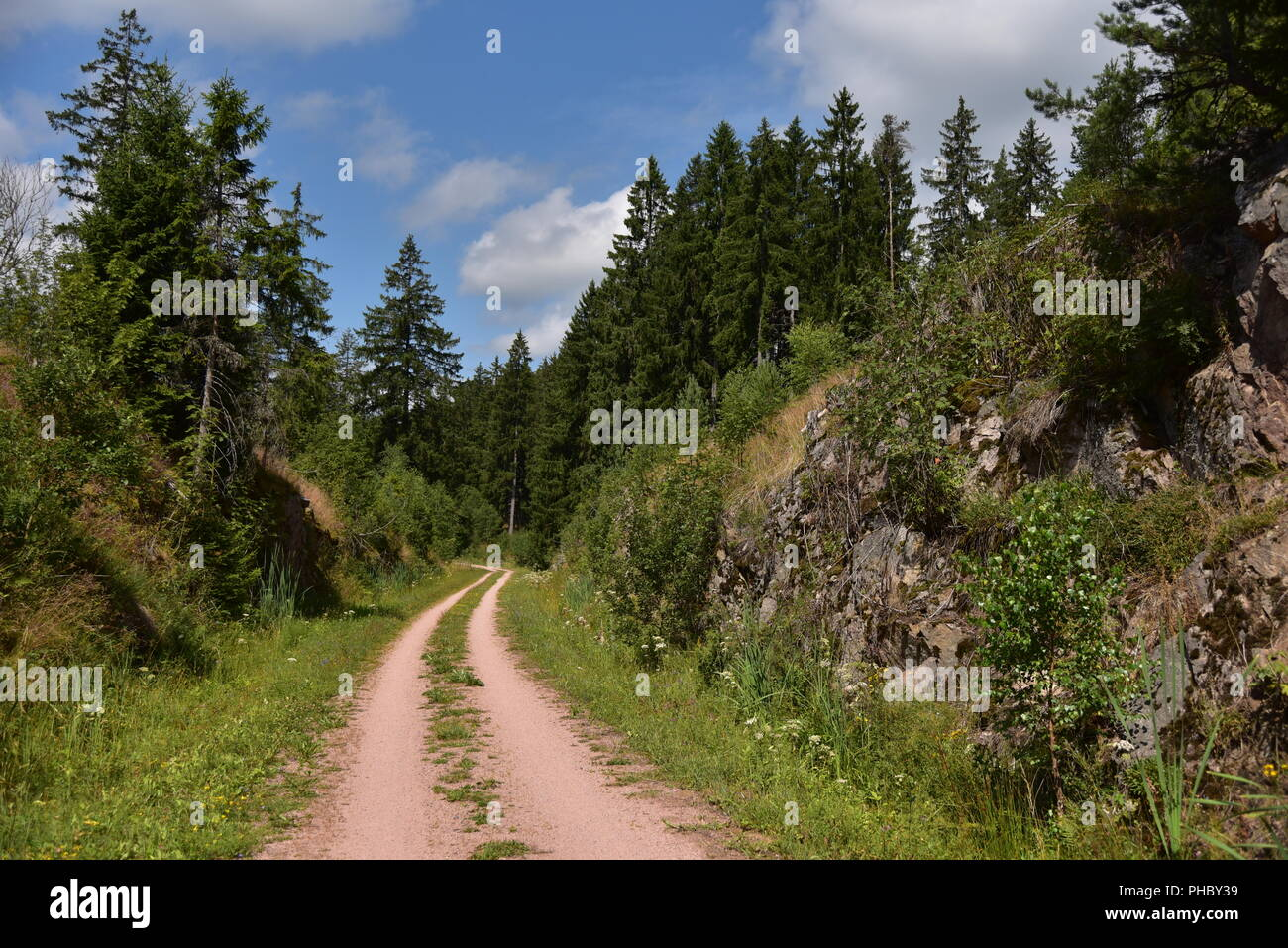 Hiking and cycle way in the Black Forest - Stock Image