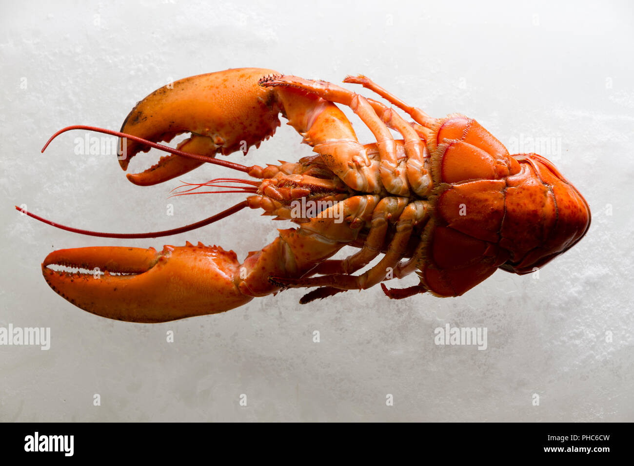 Lobster Underside High Resolution Stock ...