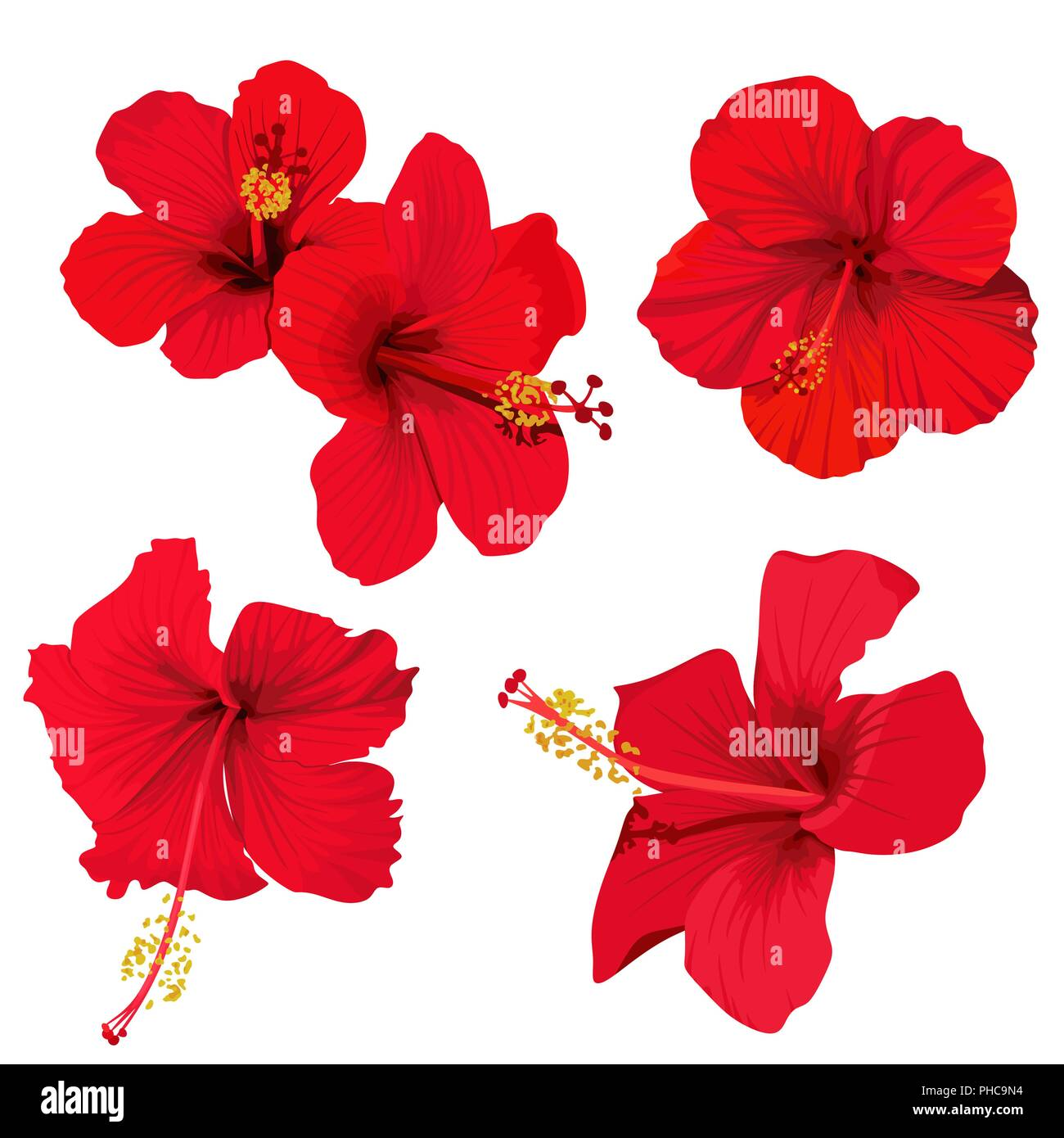 Hibiscus Flower Vector Clip Art Set Red Flowers Tropical Planrs