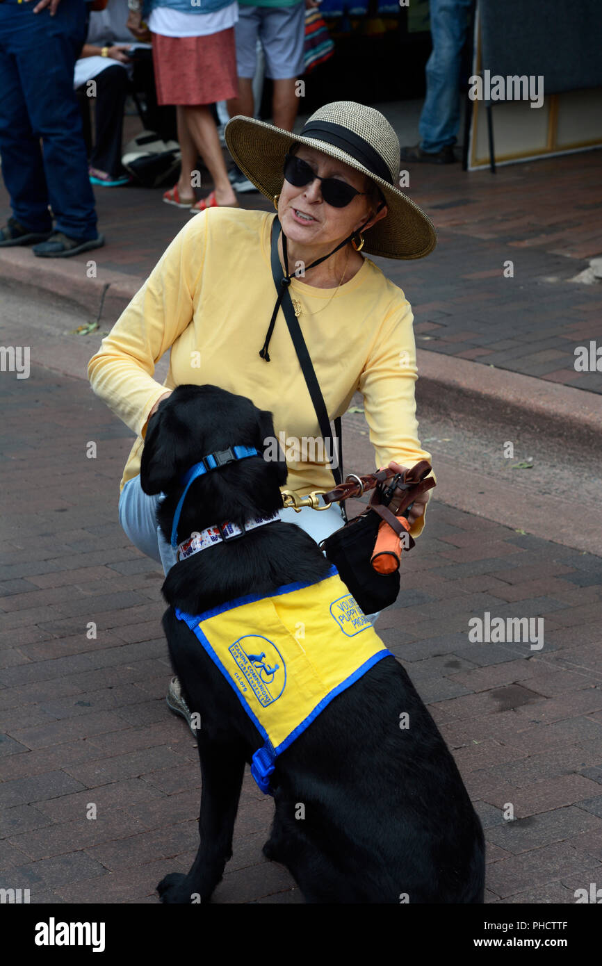 A volunteer puppy raiser for Canine Companions for Independence walks her dog in Santa Fe, New Mexico. - Stock Image