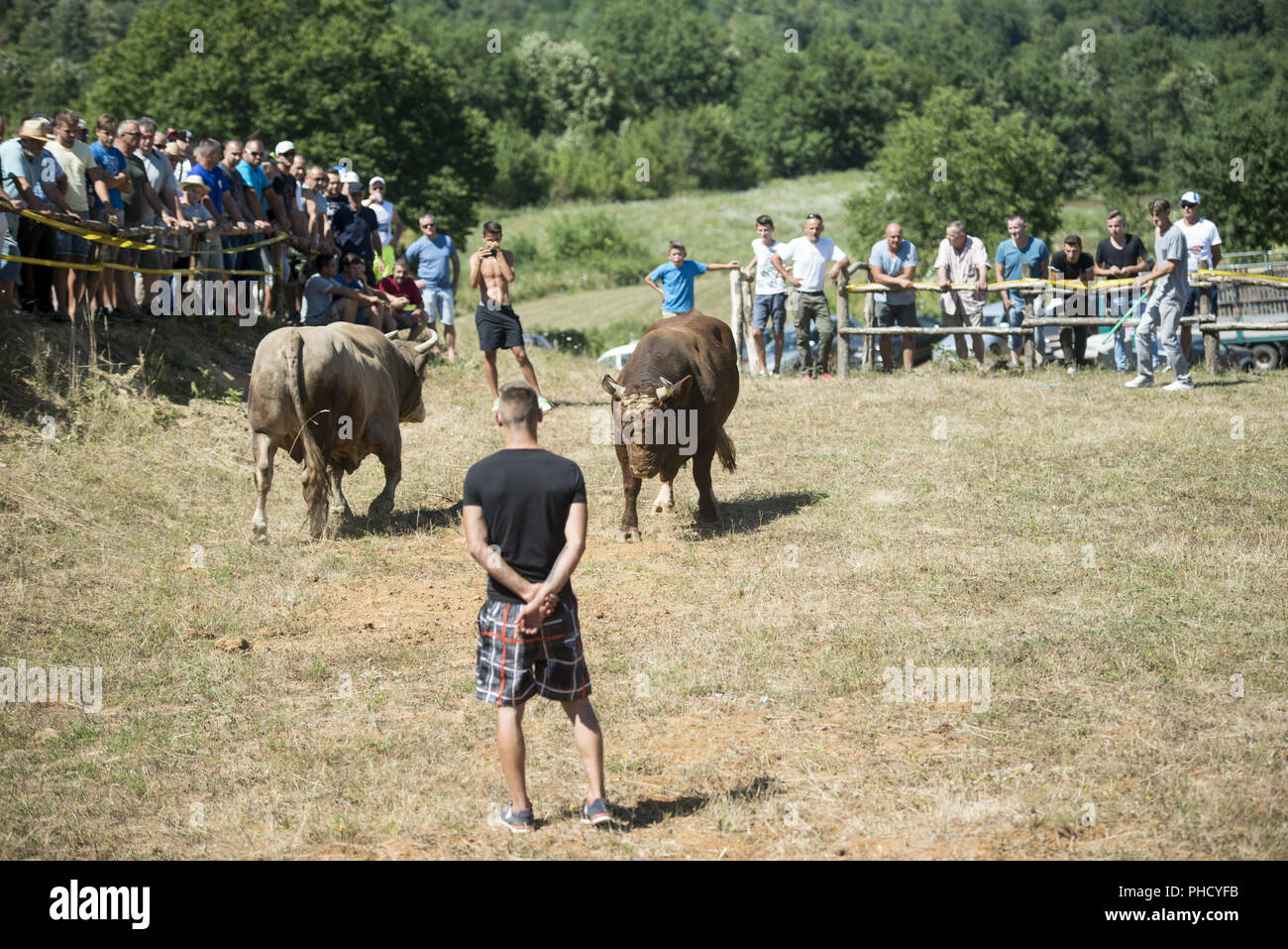 Bullfight in Bosnia Stock Photo