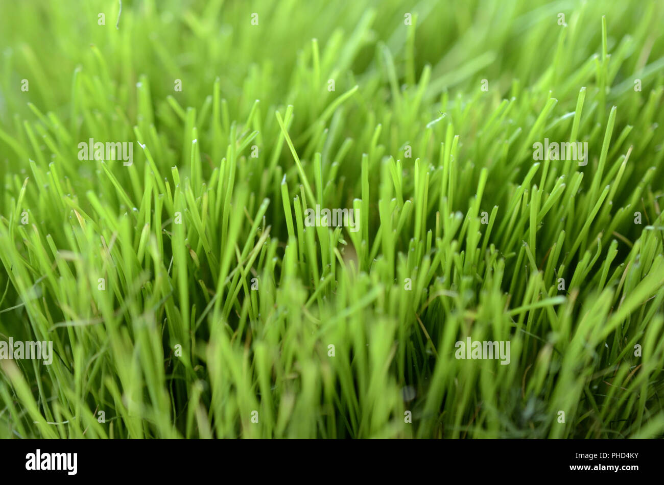close-up of lush green grass - Stock Image