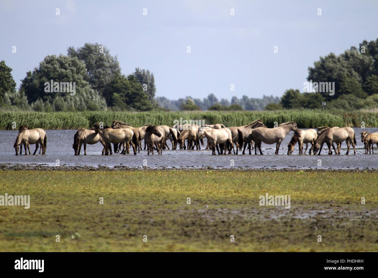 Poppet, Ezumakeech, Friesland, Netherland - Stock Image