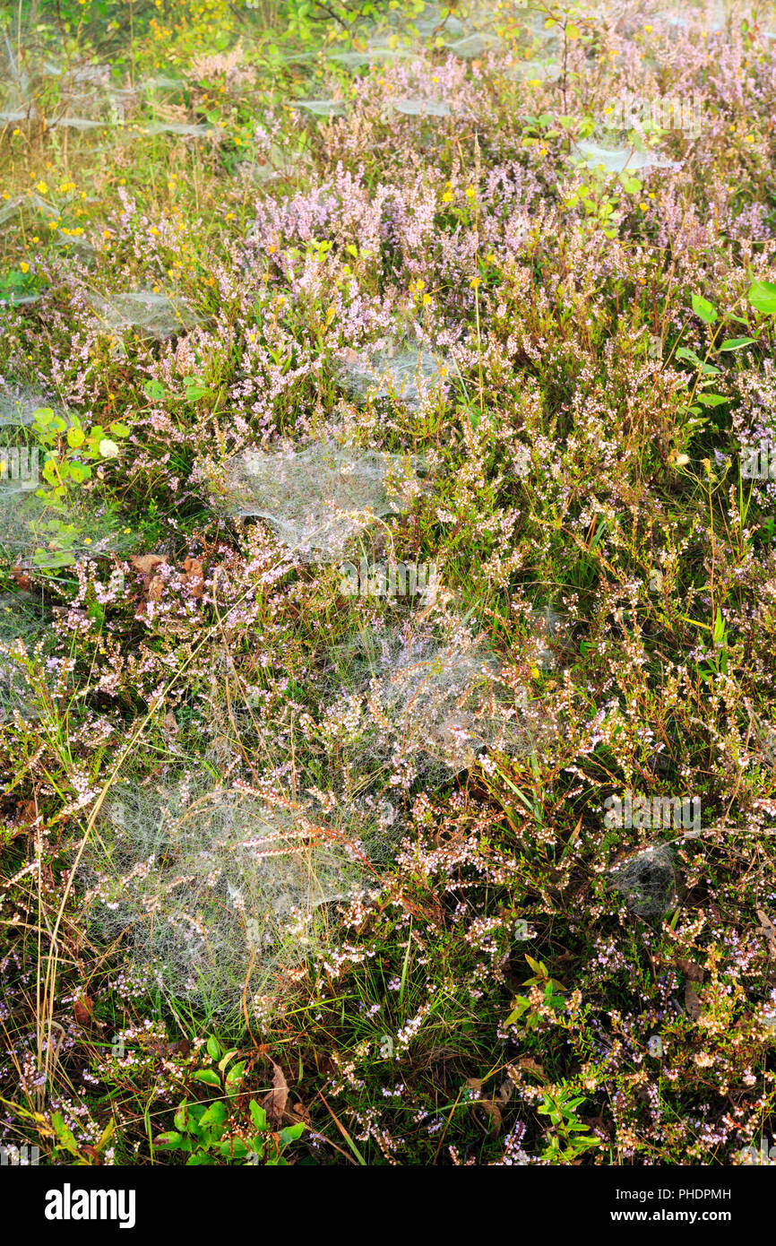 Misty morning dew on mountain meadow Stock Photo