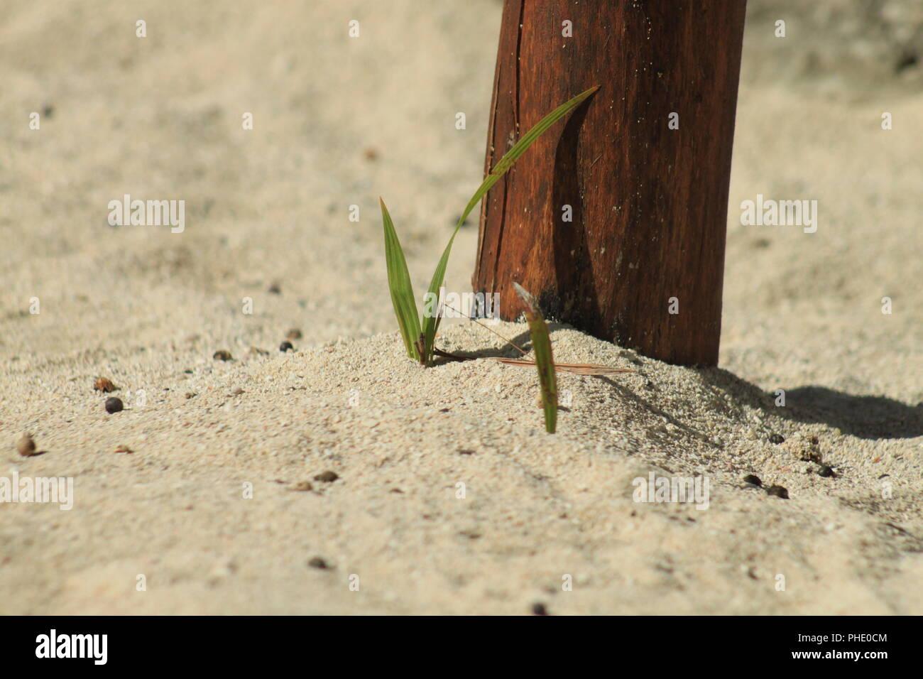 Beach sand - Stock Image