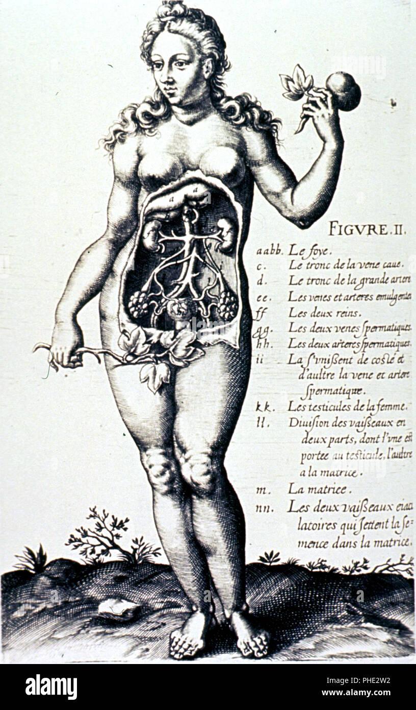 Author(s): Guibelet, Jourdain, fl.1603-1631, author  Publication: Evreux: Antoine Le Marie, 1603 - Stock Image