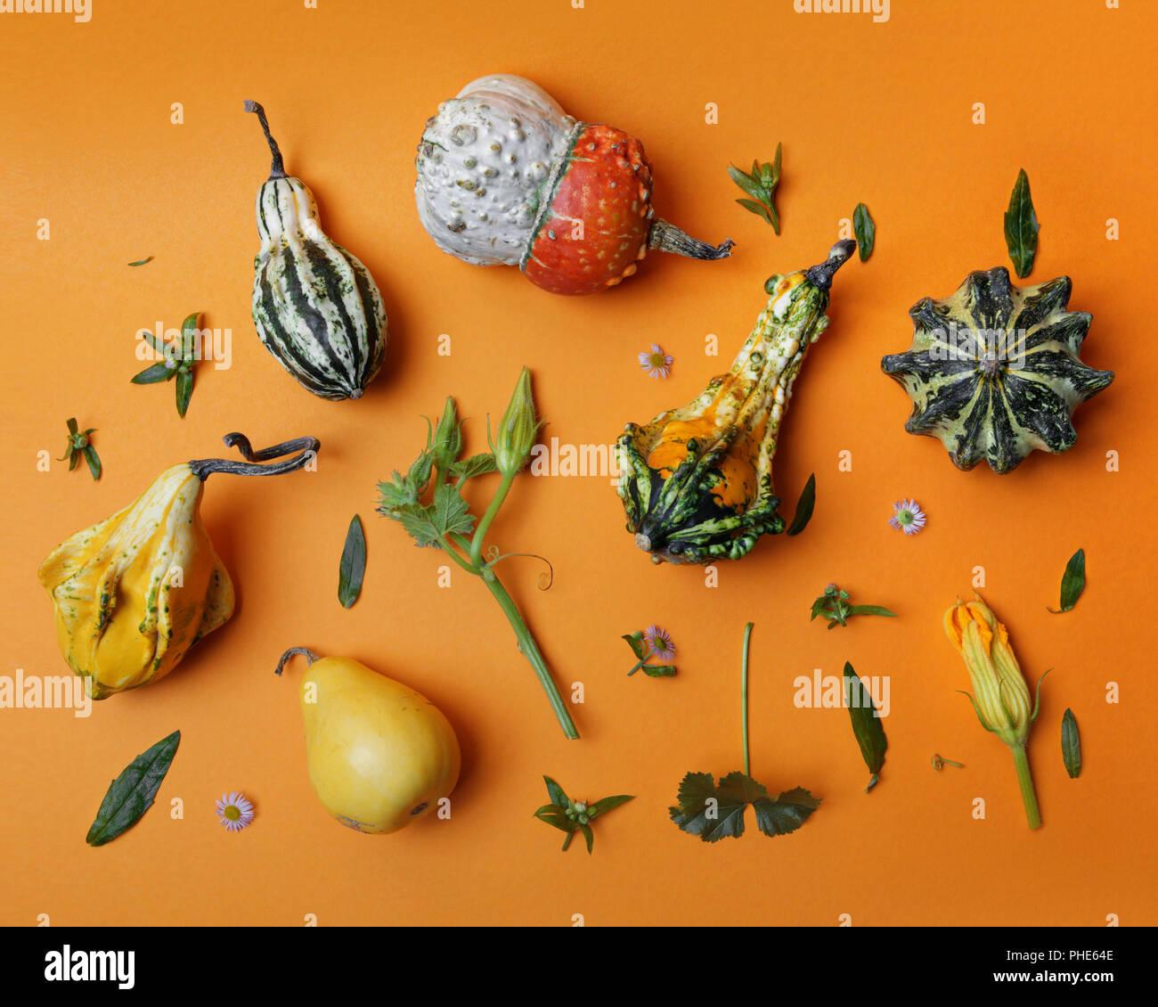 autumn pattern from decorative pumpkin Stock Photo