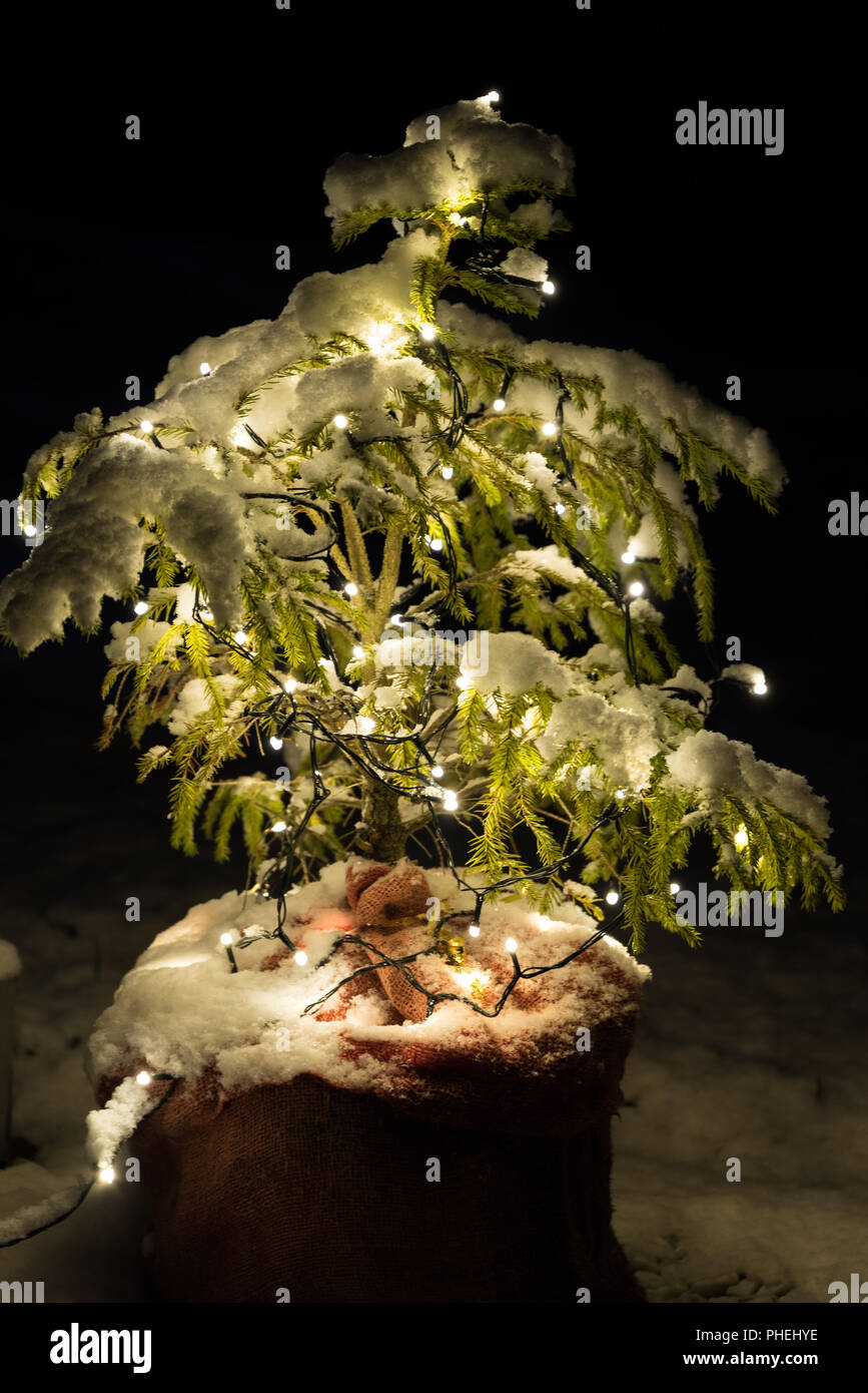 electrically lit little Christmas tree snowy in the garden - Stock Image
