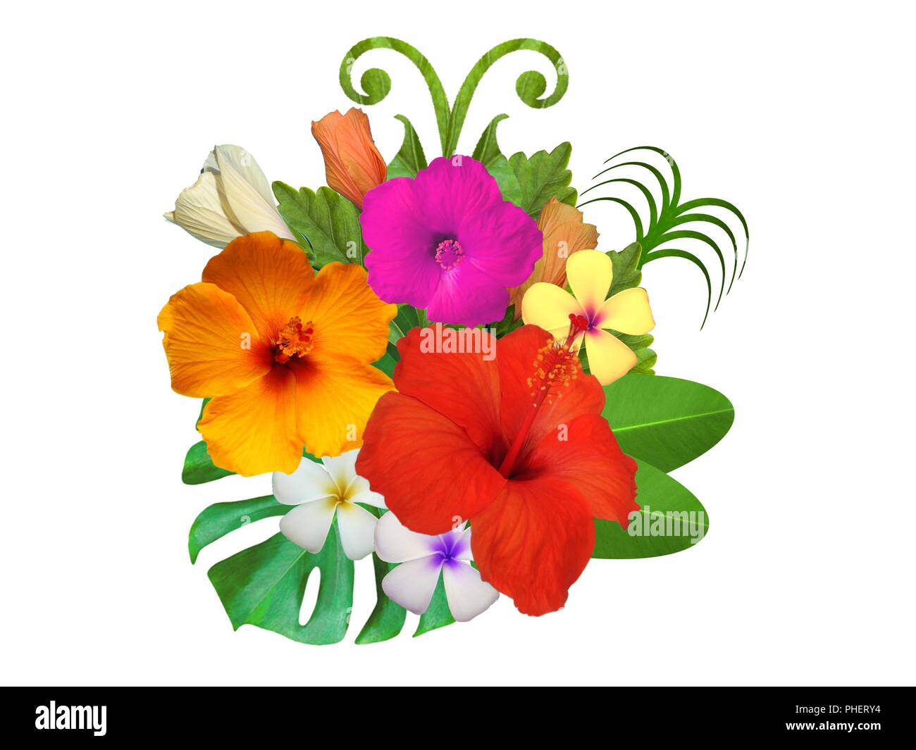 Hibiscus Flowers In Different Colors Stock Photo 217299688 Alamy