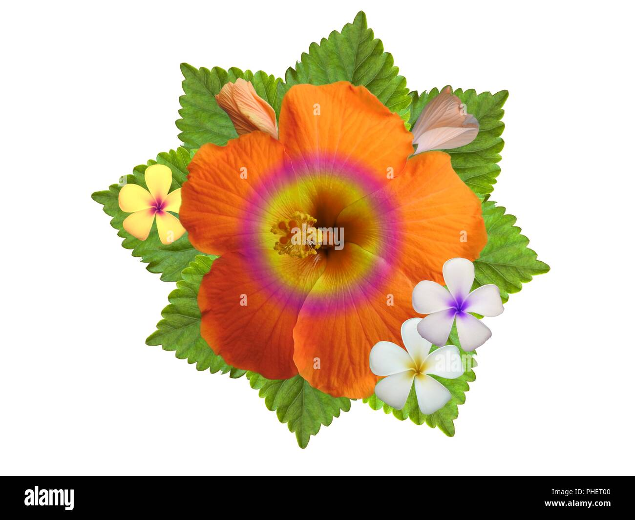 Hibiscus Flowers In Different Colors Stock Photo 217299712 Alamy
