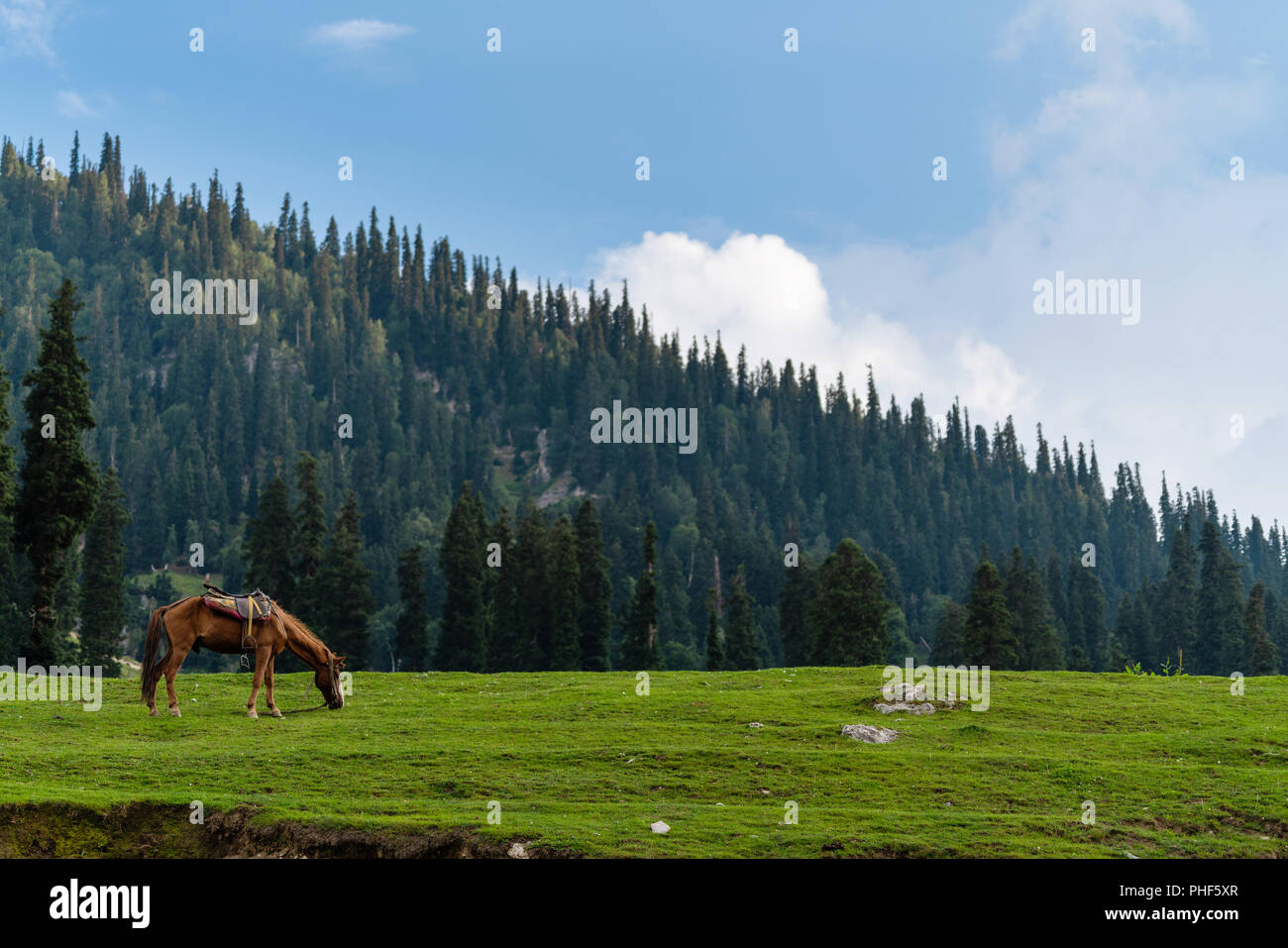 scenic countryside landscape, horse grazing grass in meadow in the morning - Stock Image