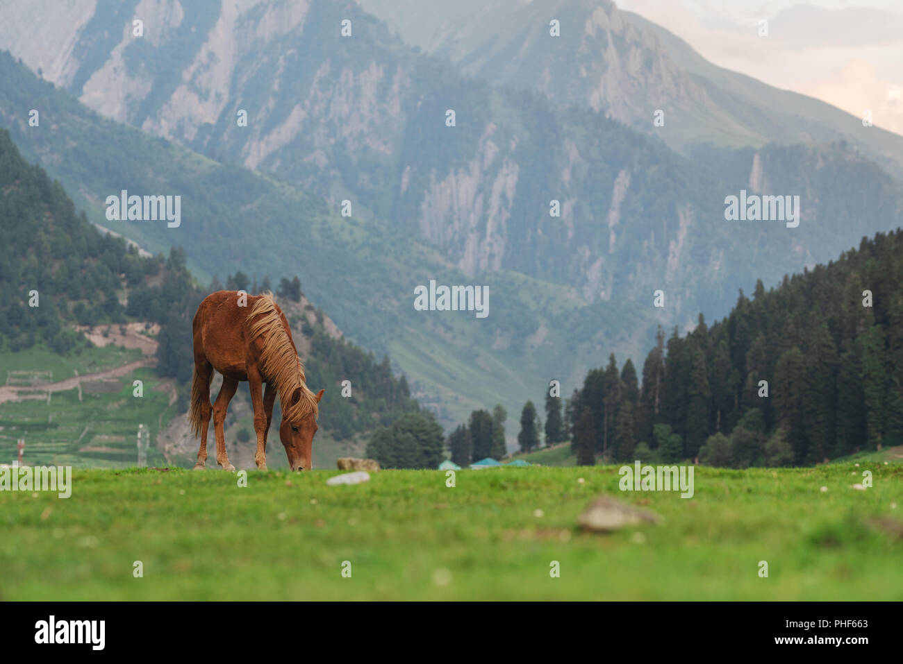Horse grazing grass on meadow with mountain and forest view in the morning - Stock Image