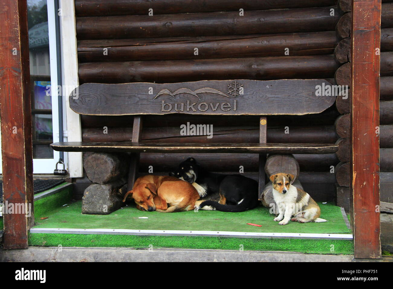 three dogs under the bench. Amusing dogs living next door - Stock Image