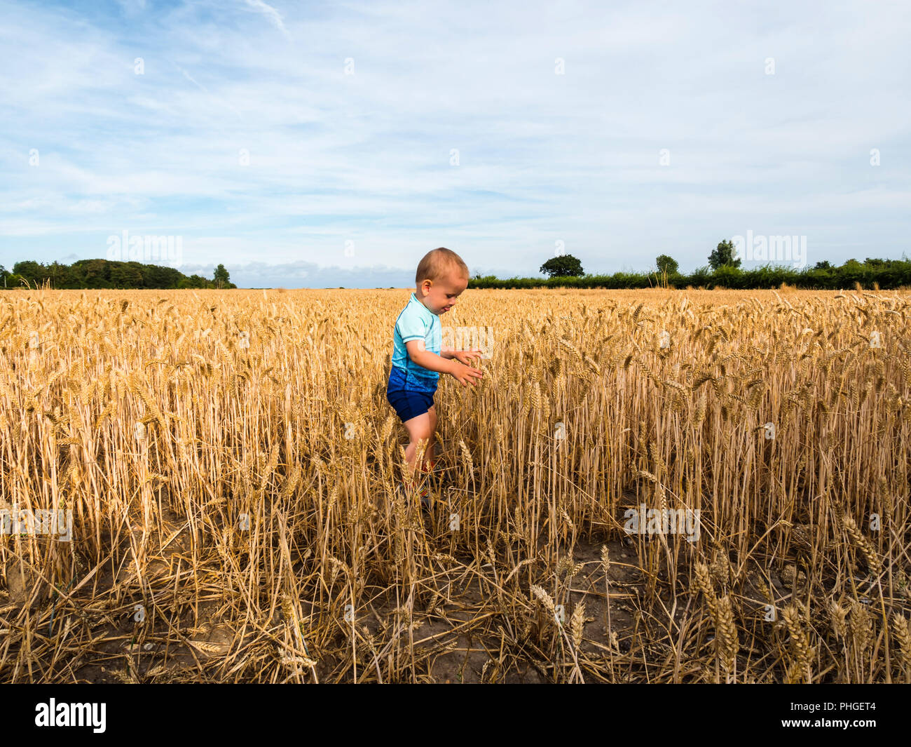 baby boy in blue swimming suit in the british field with wheat. - Stock Image