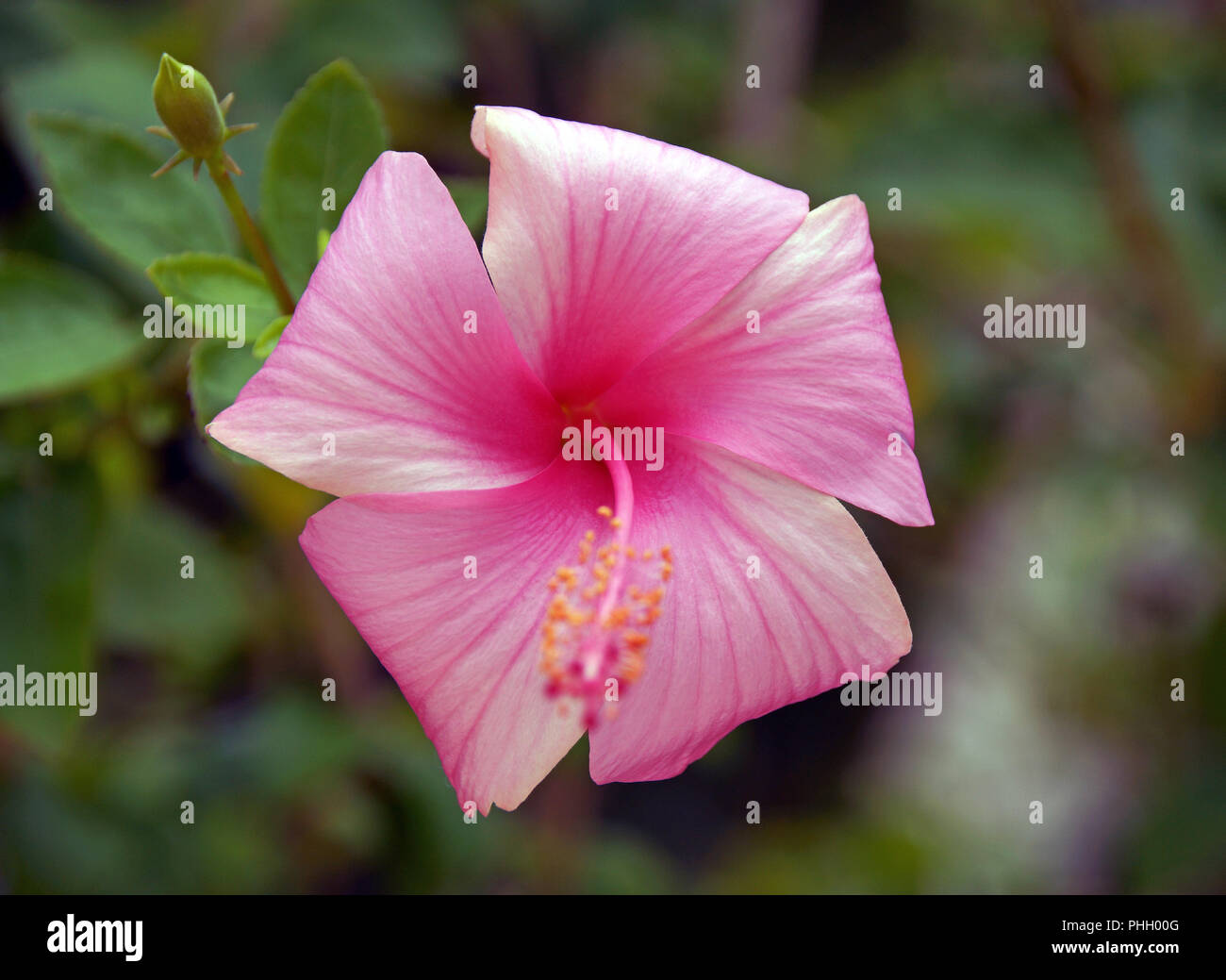 Beautiful colorful flowers Stock Photo