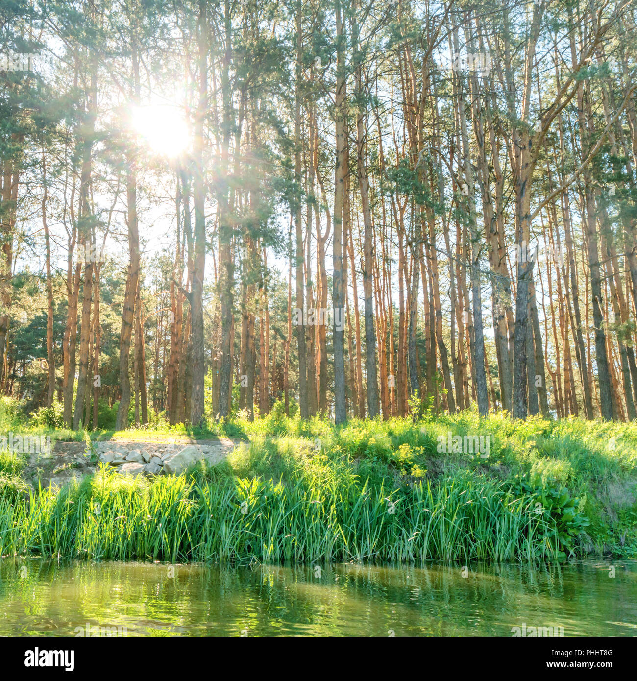 Green forest with shining sun - Stock Image